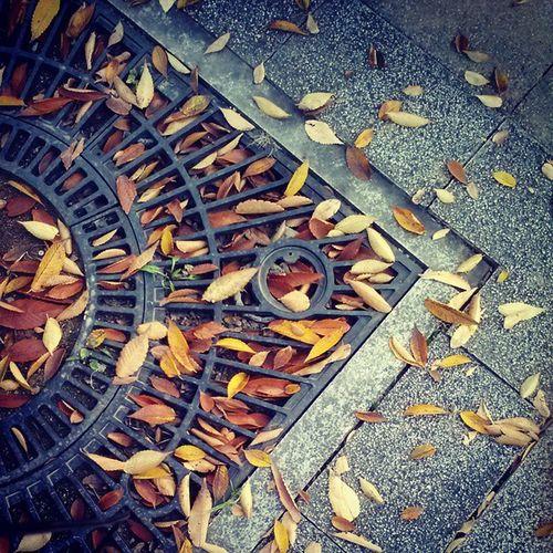 가을 낙엽 Leaves Autumn fall