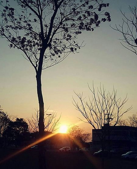 Tree Bare Tree Sunset Sunlight Branch Nature Sky Sun Landscape Outdoors Fog Plant Winter Scenics No People Dawn Multi Colored Beauty In Nature