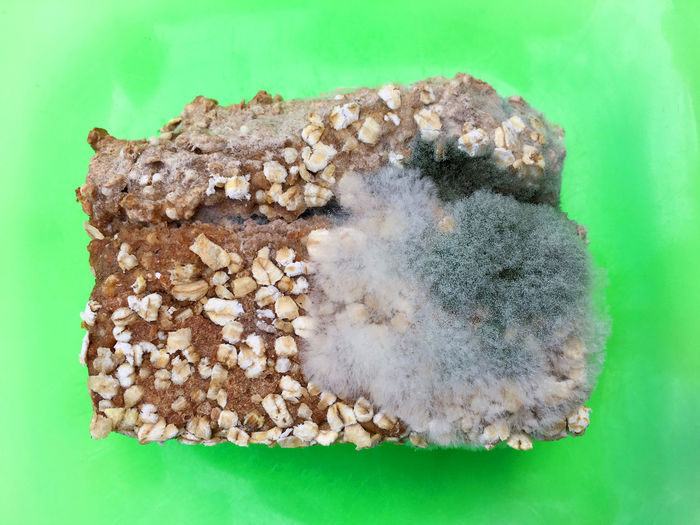 One slice of wholemeal bread overgrown with food mold fungi Decay Green Color Mold Overgrown SLICE Black Cereal Plant Close-up Day Disgusting  Food Freshness Fungi Green Color Indoors  Mucor Mycelium Nature No People Nutrition Studio Shot Toxic Unhealthy Food Wheat Wholemeal Bread