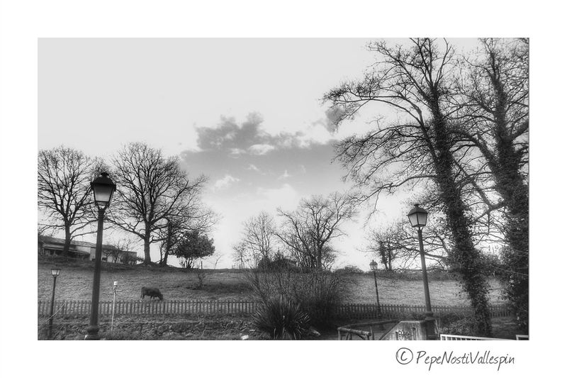 Country Life Outdoors No People Black And White Photography Outdoor Photography Poladesiero Asturias , Spain Black And White Collection  Pola De Siero