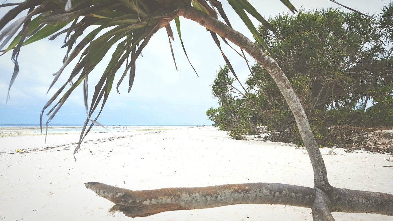 beach, sand, sea, nature, shore, day, tranquil scene, water, scenics, tree, tranquility, outdoors, horizon over water, beauty in nature, no people, sky, sunlight, palm tree, clear sky, close-up
