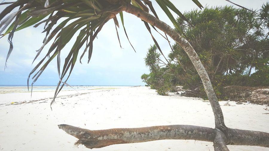Zanzibar Beach Sea Sand Nature Eym Canonphotography Travel Photography Travel Nature Photography Eye4photography