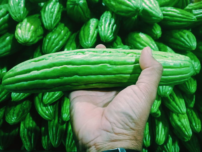 Bitter Bitter Gourd Market Marketstreet Human Hand Close-up Green Color Blooming Growing In Bloom Stem Fern Botany