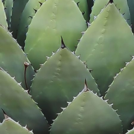 Thorn Plant Beauty In Nature Green Color Herbal Medicine Close-up Desert Uncultivated Cactus Nature