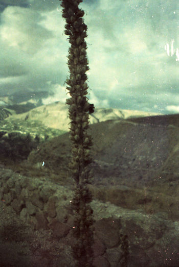 Sincholagua. Nature Beauty In Nature Mountain Landscape Film Photography Filmisnotdead Filmphoto Keepfilmalive Filmcamera Lomography Sardine 35mm Film 35mmfilmphotography Taking Photos Green Green Green!  No Filter, No Edit, Just Photography Analogue Photography Check This Out MomentsToRemember Beauty In Nature Mountains Plants Analog Camera Growth Camping Perspectives On Nature