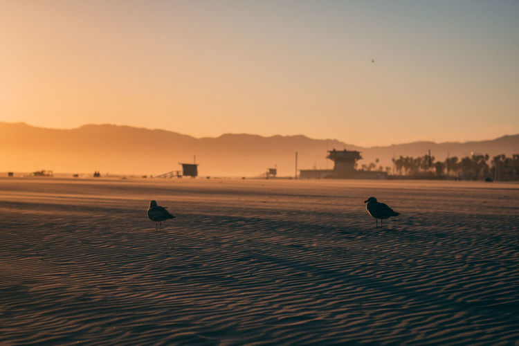 Silhouette of birds on beach against sky during sunset