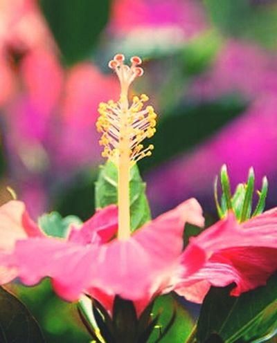 Panama Beauty Flowers Love Flower Porn