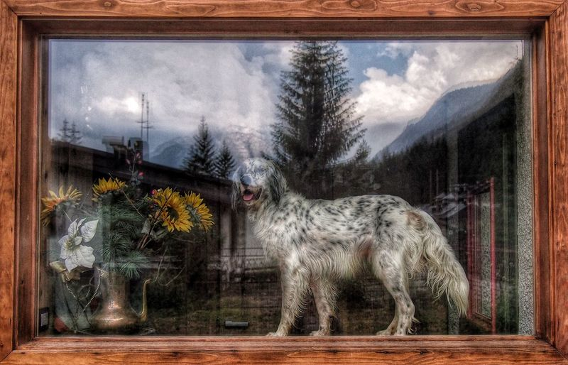 Animal_collection Dog Love Tadaacomunity I Love My Dog ArtWork Artphotography Reflection_collection Reflecting