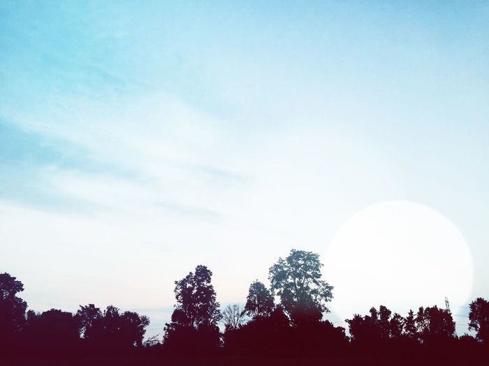 Beautiful blue sky and tree landscape silhouette concept. Beauty In Nature Clear Sky Day Growth Low Angle View Moon Nature No People Outdoors Scenics Silhouette Sky Tranquility Tree
