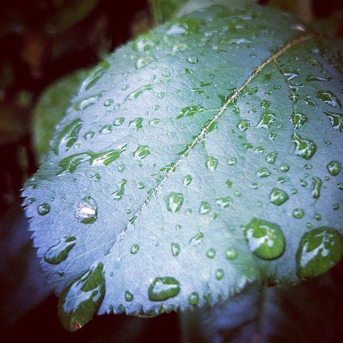 Lehti Kesä Sade Pisarat rain leaf summer sonyxperiaz2