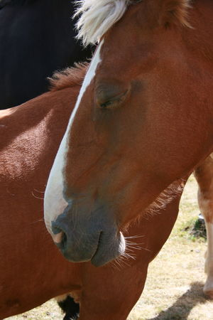 Sleeping horse close-up portrait. Horses Andorra Animal Themes Brown Close-up Domestic Animals Field Horse Livestock Mammal Sleeping Horse Been There.