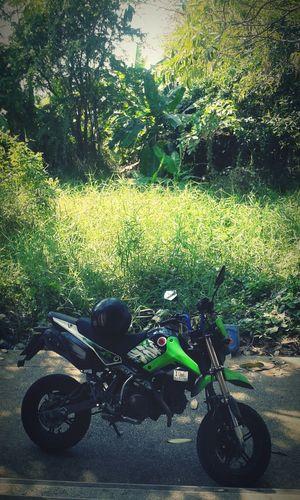 ลุยป่า