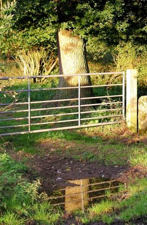 Upon reflection Farm Gate Farm Track Fence Five Bar Gate Gate Gates Gateway Grass Metal Gate Puddle Puddle Of Mud Puddle Reflections Puddles Reflect Reflected  Reflecting Reflection Reflection Perfection  Reflections Reflections In The Water Reflective Tree Tree Reflection  Tree Reflection In A Puddle Tree Reflections