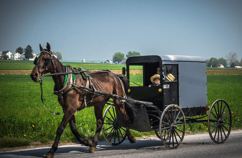 Amish and horse Horse Amish Amish boy Amish Country Amishcountry Amish Buggy Amish Town Amish Know How To Roll Amish Life Amish