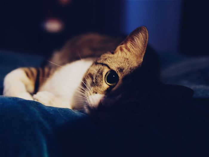 Pets Cat Close-up Whisker Curiosity Relaxation Domestic Cat Indoors  Cushions  Round Eyes Focus On Foreground Feline Looking Into You Bestfriend Welcome To Black Late Night Sleep Time Fujifilm_xseries Fuji Xpro2 Fujifilm X-pro2 35mm F2 Home Interior Eyeem Animal Lovers EyeEm Gallery X-PRO2