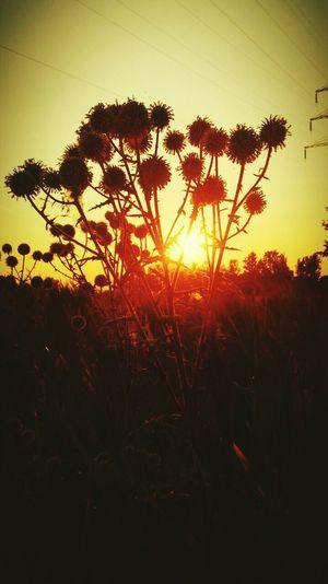 Sun Burning Sky
