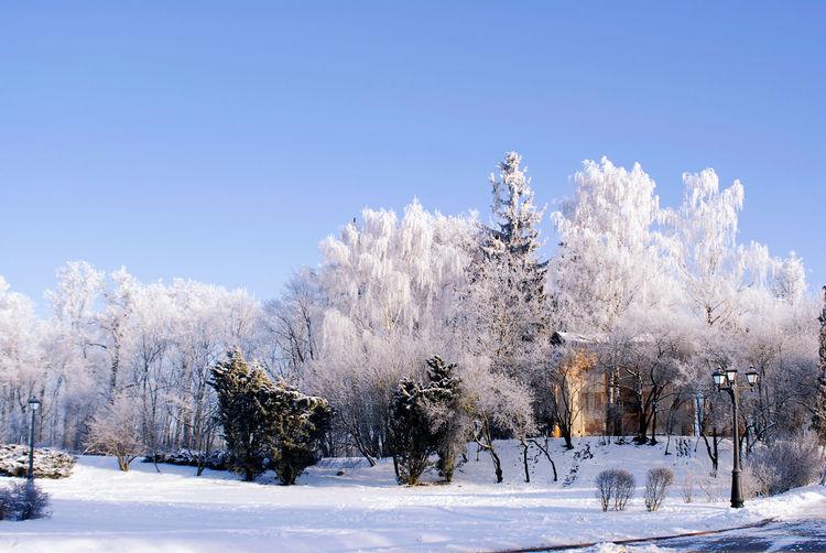 Minsk, Loshica Park Frozen Snow ❄ Winter Beauty In Nature Cold Temperature Landscape Nature