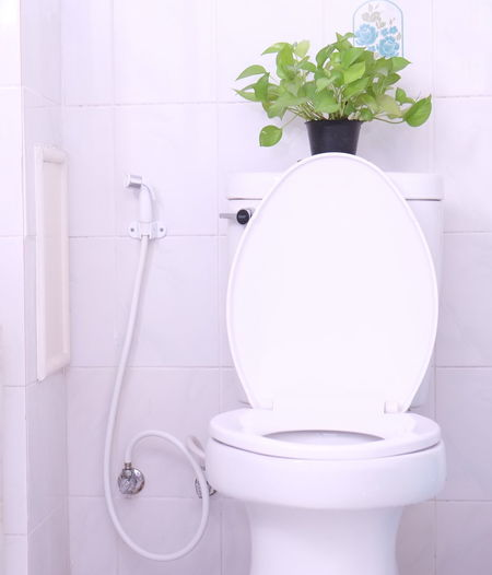 Close-up of toilet bowl and potted plant in bathroom