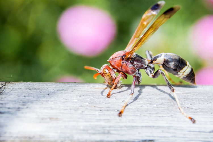 Close-up of wasp on wood