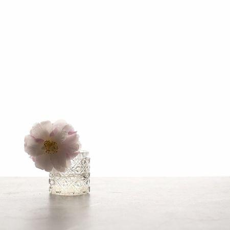 Minimalist delight on such a gloomy day. Still Life Sydney Flower Flowerporn Minimalism Minimal