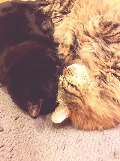 Close-up of cat sleeping