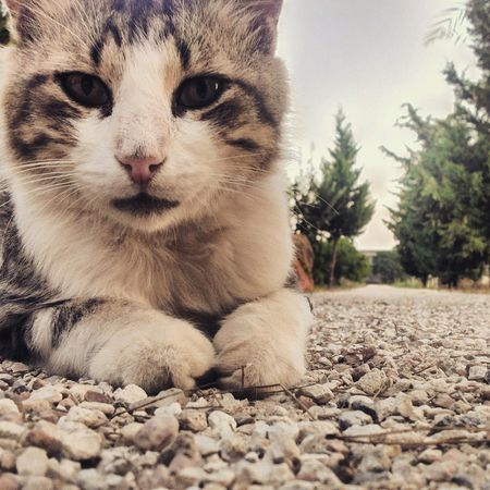 Hi! Cheese! Point Of View Cheese! Lovely Cat Cat Good Moment Of The Day  Sweety Cat Captured Moment From My Point Of View