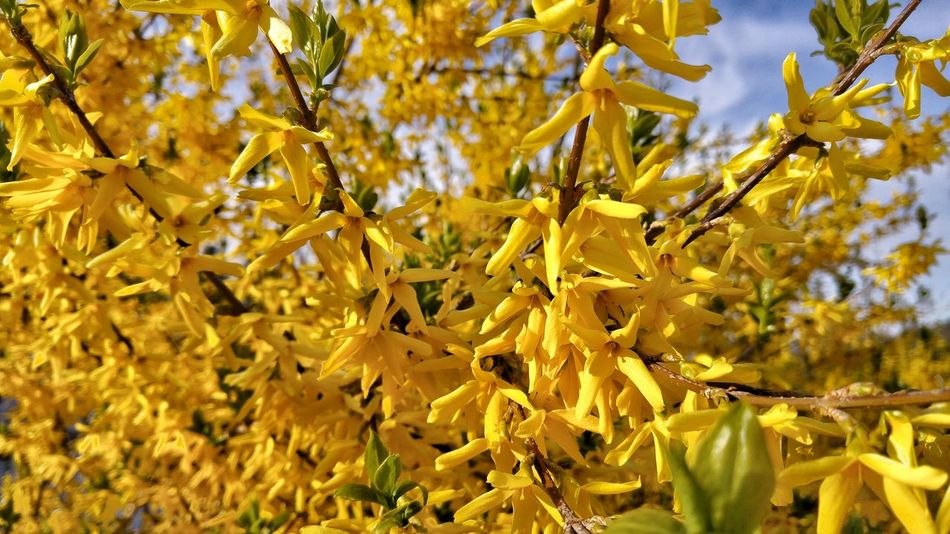 Blumenzauber Frühlingsanfang Frühlingserwachen Frühlingsgefühle Frühling 2016 🌾 Frühlingsfarbe Spring 2016 Springtime Spring Sunshine