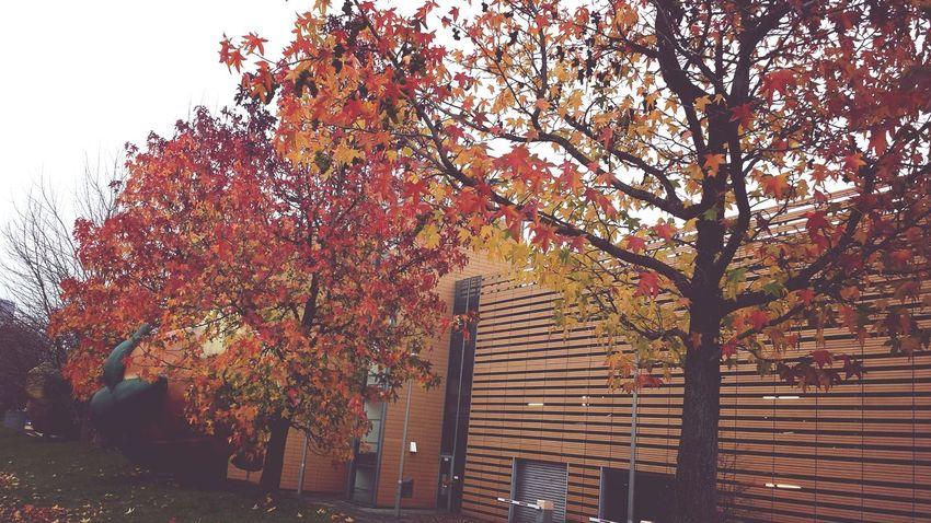 Loving the colours!! Autumn Autumn Colors Berlin