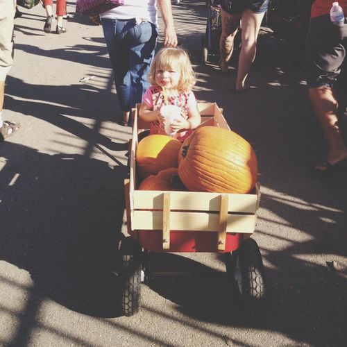 Pumpkins festival! Beatiful Weather and cute Kid