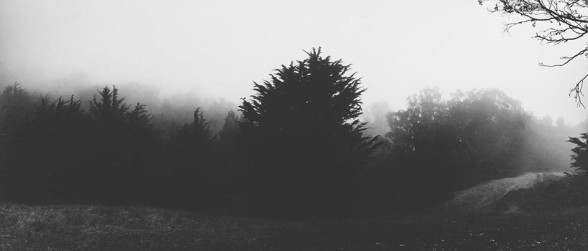 Trees Dark Black & White Fog