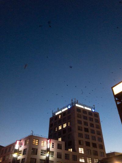 Sky Earlymorning  Birds Bluesky Dusk City Building Low Angle View Skyscraper Birdsflyingaway Birdsflyingsunset