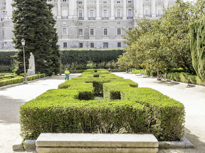 Hedge amidst footpath against royal palace of madrid