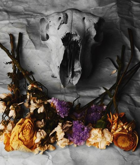 'The Story' Historical Photograph College Work Photography Skull Flowers Proud First Eyeem Photo First Eyem Photo