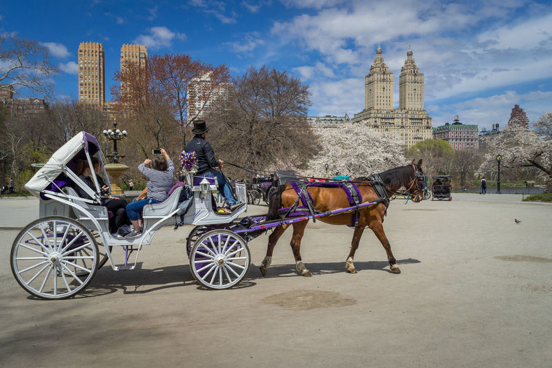 Horse Carriage ride through Central Park located in New York City. Central Park New York Architecture Built Structure City Domestic Animals Horse Horse Cart Horsedrawn Incidental People Landmark Leisure Activity Sand Tourism Transportation Travel Destinations Working Animal