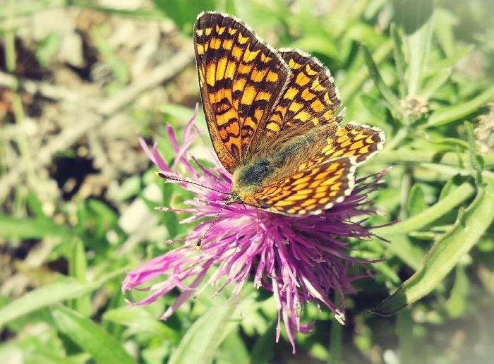 Butterfly Butterfly Farfalla Colorful Enjoying Nature Taking Photos Nature Flowers Moments EyeEm Nature Lover Stolen Shot