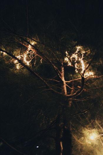 Full frame shot of bare tree at night