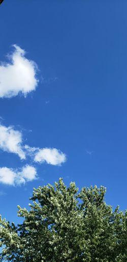 Tree Blue