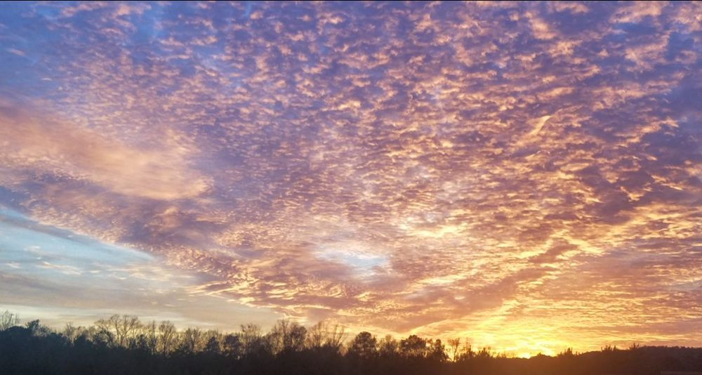 Alabama Sunset EyeEm Nature Lover EyeEmNewHere No Filter, No Edit, Just Photography Sunset Tree Scenics Dramatic Sky Nature Cloud - Sky Sky Beauty In Nature Tranquil Scene No People Outdoors Landscape Multi Colored