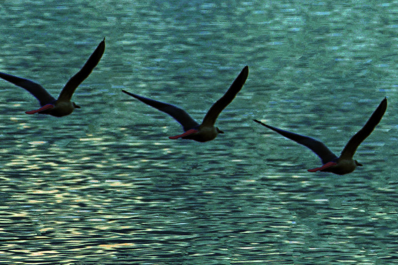 Water Animals