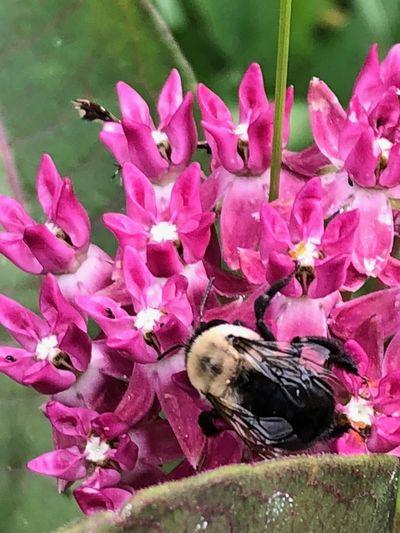 bee Flowering