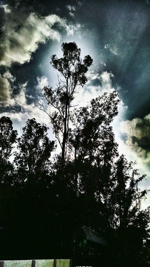 Trees Nature Mobilephotography EyeEm Nature Lover HDR Clouds And Sky Photooftheday Photography_is_fun Random Shadows & Lights