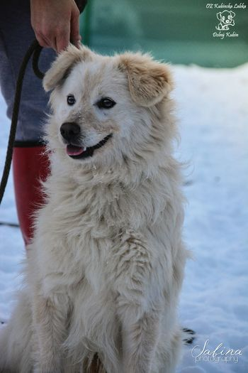 Momo from the shelter :) Beautiful Shelter Photography Cute Photo Winter Animal Dog Adorable White