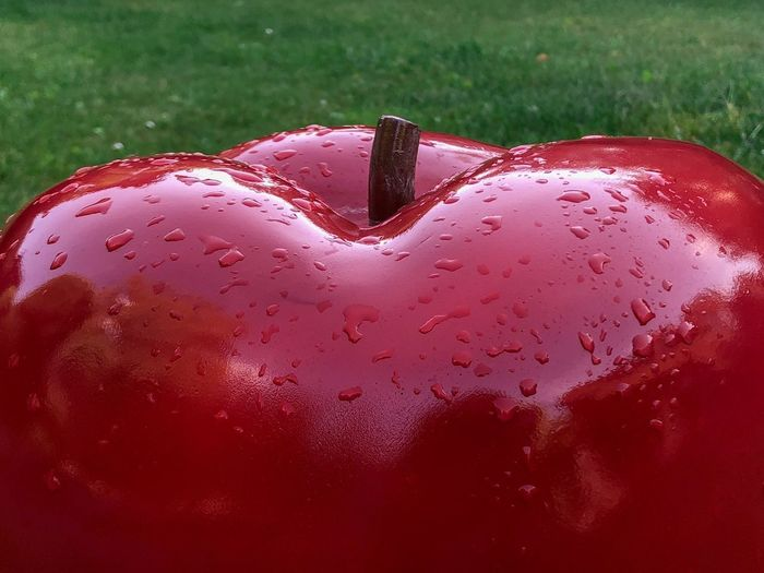Apple on the grass Apple Apple - Fruit Close-up Red No People Wet Drop Grass Nature Water Day Field Outdoors Focus On Foreground Plant Land Food And Drink Food Green Color