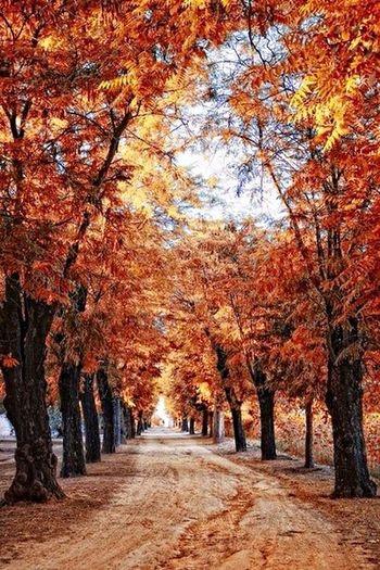 Люблю осень⭐️🍃🍂☔️ Taking Photos Wonderful Forest Walk Leaves Loving EyeEm Best Shots - Trees Beauty Morning Autumn