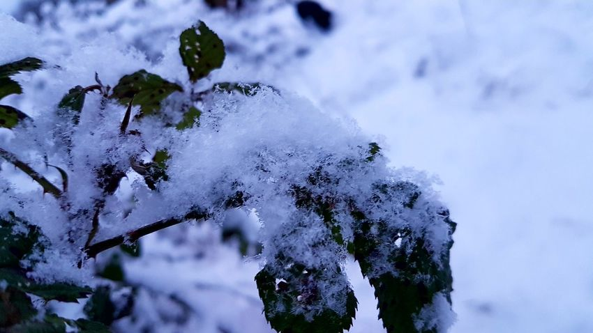 EyeEmNewHere Nature Winter No People Cold Temperature Outdoors Snow Close-up