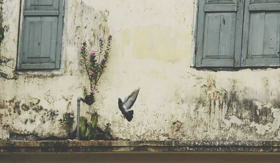 Window Building Exterior Architecture Bird Day Bangladesh Fine Art Photography Nature Outdoors Beauty In Nature