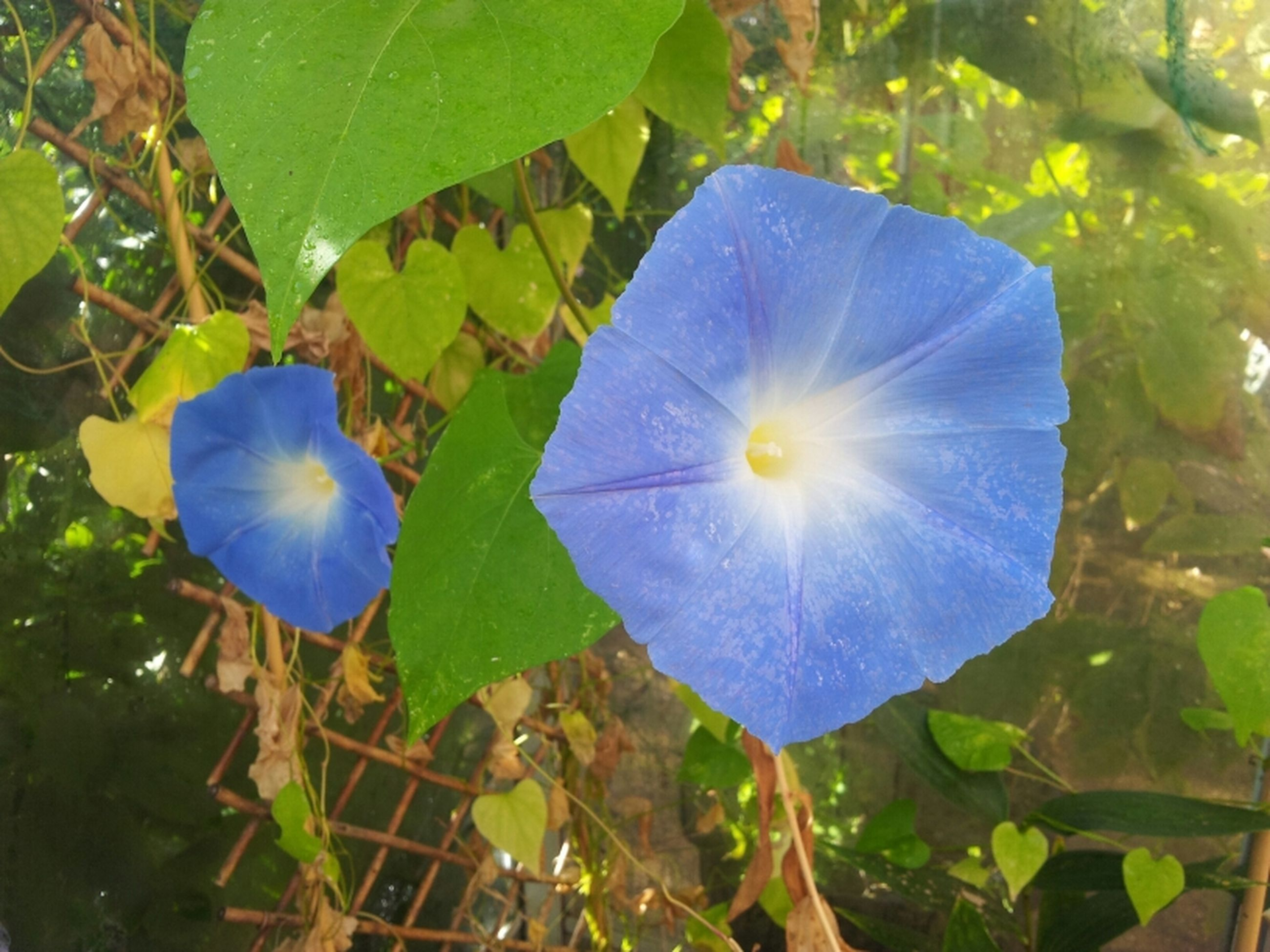leaf, growth, freshness, beauty in nature, nature, green color, fragility, close-up, plant, blue, sunlight, flower, day, outdoors, purple, no people, single flower, tranquility, green, low angle view