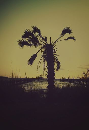 OBX OBX North Carolina OBX NorthCarolina Beach Outer Banks, NC Water Sunset_collection Subset Palm Tree Tree Trees