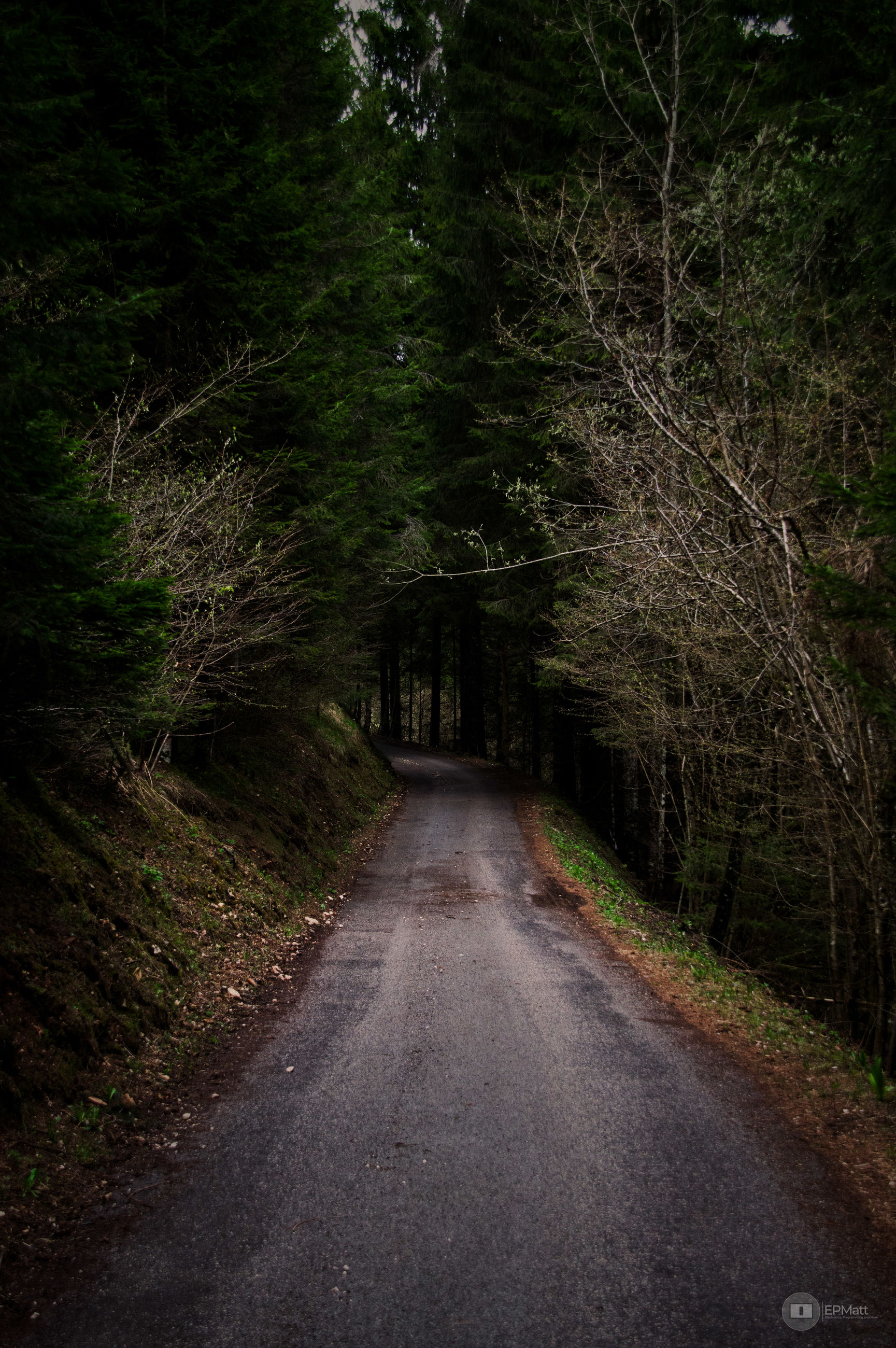 direction, the way forward, tree, plant, forest, transportation, road, no people, land, nature, diminishing perspective, tranquility, growth, woodland, beauty in nature, outdoors, tranquil scene, empty, day, non-urban scene, dark