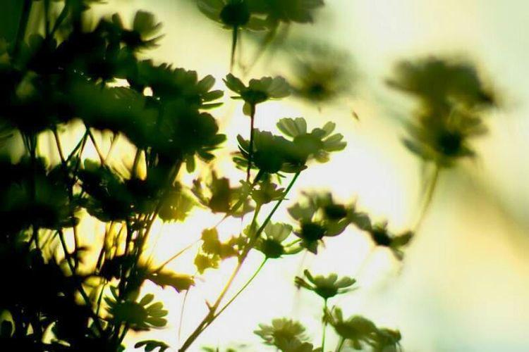 Growth Flower Freshness Plant Sunset Botany